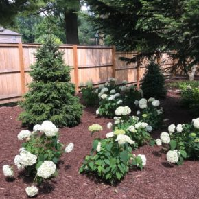 Flower bed with trees and hydrangeas