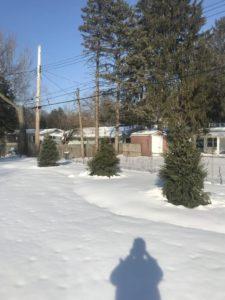 Winter tree trimming