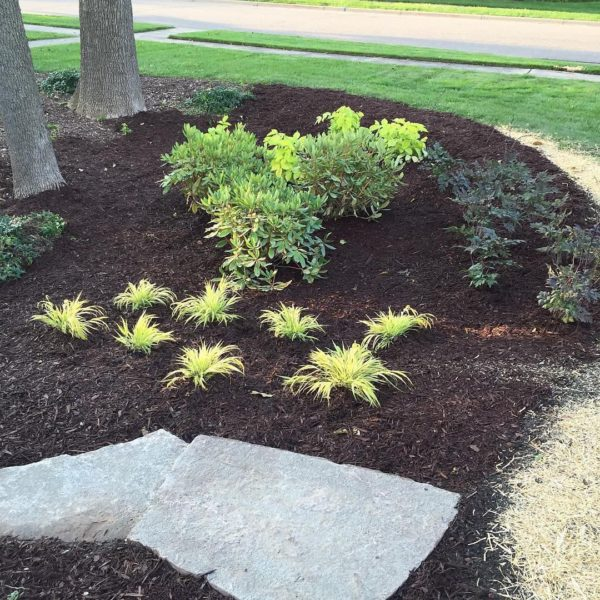 Flower bed featuring greenery